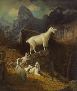 North American Wildlife Painting Posters - Rocky Mountain Goats Poster by Albert Bierstadt