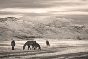 Colorado Mountain Prints Prints - Rocky Mountain Longs Peak Colorado Sepia Horse Morning Print by James Bo Insogna