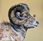 Hunting Pastels Framed Prints - Rocky Mountain Ram Framed Print by Ann Marie Chaffin