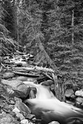 James BO  Insogna - Rocky Mountain Stream in Black and White