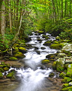 Oak Creek Photos - Rocky Mountain Stream by Robert Harmon