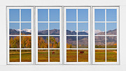 Room With A View Framed Prints - Rocky Mountains Horses White Window Frame View Framed Print by James Bo Insogna