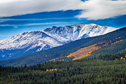 Snow Tree Prints Metal Prints - Rocky Mountains Independence Pass Metal Print by James Bo Insogna