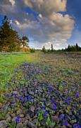 Larkspur Photos - Rocky Prairie Cloud Explosion by Mike  Dawson