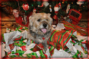 Border Terrier Digital Art Posters - Rockys Christmas Poster by Digital Designs By Dee