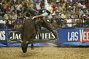 Bull Riders Photos - Rodeo 17 by Don Olea