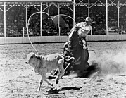 Rodeos Posters - Rodeo Calf Roping Poster by Underwood Archives