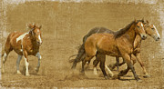Horses Prints - Rodeo Horses Print by Rebecca Cozart