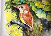 Rofous - Backed Kingfisher  Print by Jason Sentuf