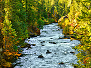 Autumn Trees Prints - Rogue River Melody Print by Diane Schuster