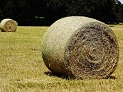 Pasture Photos - Roll Of Hay by D Hackett