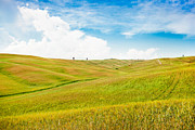 Cornfield Photos - Rolling hills in Tuscany by JR Photography
