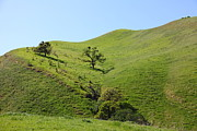 Old Country Roads Prints - Rolling Hills Landscape of The Black Diamond Mines in Antioch California 5D22324 Print by Wingsdomain Art and Photography
