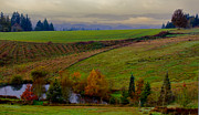 Helvetia Framed Prints - Rolling Hills of Autumn Framed Print by Don Schwartz