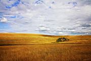 Canadian Landscape Framed Prints - Rolling Prairie Framed Print by Theresa Tahara