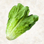 Fresh Vegetables Painting Posters - Romain Lettuce  Poster by Danny Smythe