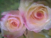 Mauve Roses Photo Acrylic Prints - Romance 1 Acrylic Print by Shirley Sirois