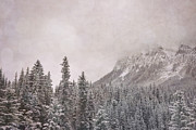 Rocky Mountain National Park Greeting Cards Posters - Romance Mountain Poster by Andrea Hazel Ihlefeld