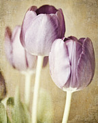 Bathroom Wall Art Posters - Romantic Pastel Purple Tulips Poster by Lisa Russo