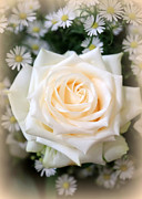 Wishes Photos - Romantic White Rose by Carol Groenen