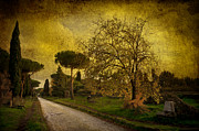 Engineering Originals - Rome VIA APPIA ANTICA Study I by Stefano Sabene
