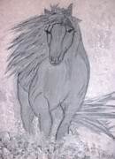 Jessie Art Prints - Romeo The White Stallion Print by Jessie Art