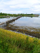 Jetty View Park Photos - Roosevelt Campobello View by Christiane Schulze