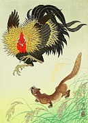 Fauna Mixed Media Metal Prints - Rooster and Weasel Metal Print by Reproduction