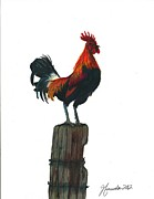 Yellow Beak Drawings - Rooster Beyond the Morning by J Ferwerda