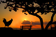 Dan Friend - Rooster enjoying a sunrise on the beach