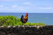 Rooster Photographs Framed Prints - Rooster in Paradise Framed Print by John  Greaves