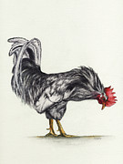 Chickens Paintings - Rooster by Nan Wright