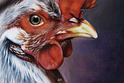 Red Eye Drawings - Rooster by Natasha Denger