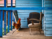 Rooster On Porch  Print by Robert Watcher