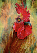 Vivid Framed Prints - Rooster On The Loose - Abstract Realism Framed Print by Zeana Romanovna