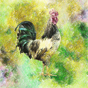 Magenta Drawings Framed Prints - Rooster Framed Print by Taylan Soyturk