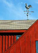Red Roof Photos - Rooster Weathervane by Sabrina L Ryan