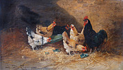 Barnyard Animal Paintings - Roosters circa 1880 by  J Batjien