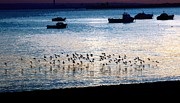 Flying Sculpture Prints - Roosting time on the Thames Estuary Print by Lone Cloud