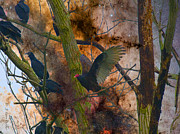 Layered Prints - Roosting Vultures Print by J Larry Walker