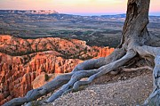 Adam Jewell - Roots Above The Hoodoos