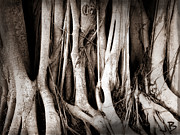 Tree Roots Digital Art Prints - Roots Print by Jorge Bencosme