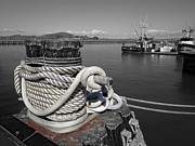 Cleat Framed Prints - Roped Cleat - San Francisco Harbor Framed Print by Daniel Hagerman