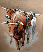 Bulls Drawings Posters - Roping Bulls Poster by Kathleen English-Barrett
