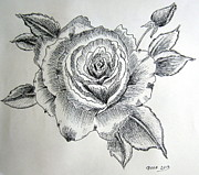 Flora Drawings Prints - Rosa black and white Print by Gordana Stankovic