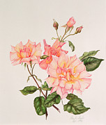 Fresh Flowers Paintings - Rosa Compassion by Pamela A Taylor