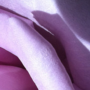 Focal Color Art Photos - Rose 2-6 B by Ann Pelaez