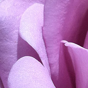 Focal Color Art Photos - Rose 2-8 C by Ann Pelaez