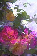 Floral Metal Prints - Rose 206 Metal Print by Pamela Cooper