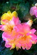 Multicolored Roses Prints - Rose 211 Print by Pamela Cooper